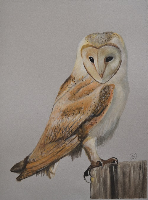barn_owl_painting_for_amber_small_28_12_13.jpg